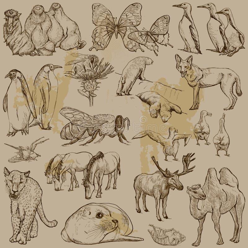 Animales - paquete dibujado mano del vector ilustración del vector