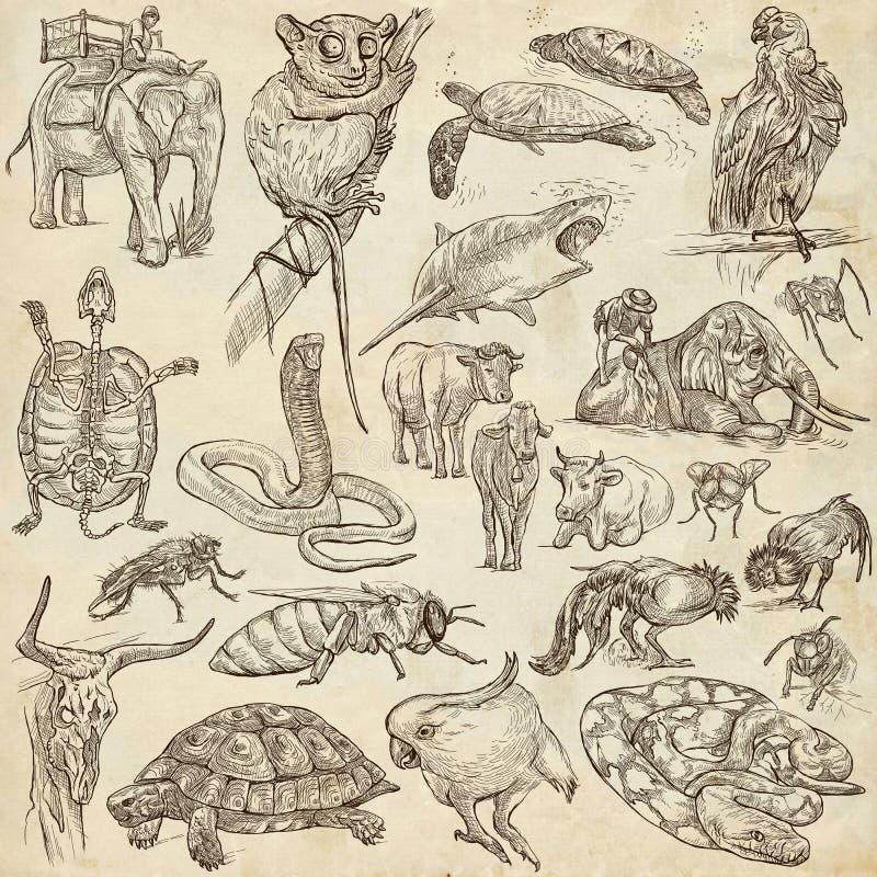 Animales - a pulso bosquejando, paquete stock de ilustración