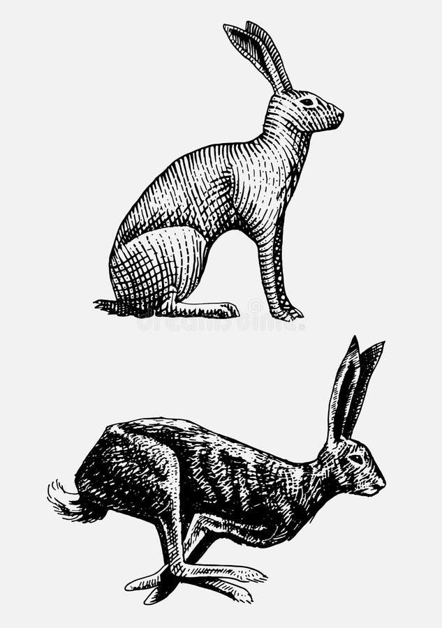 Animales salvajes dibujados, grabados de la sentada del conejo o de las liebres y de la mano corriente en vintage o estilo retro, libre illustration