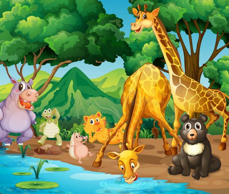 Animales salvajes que beben del río libre illustration