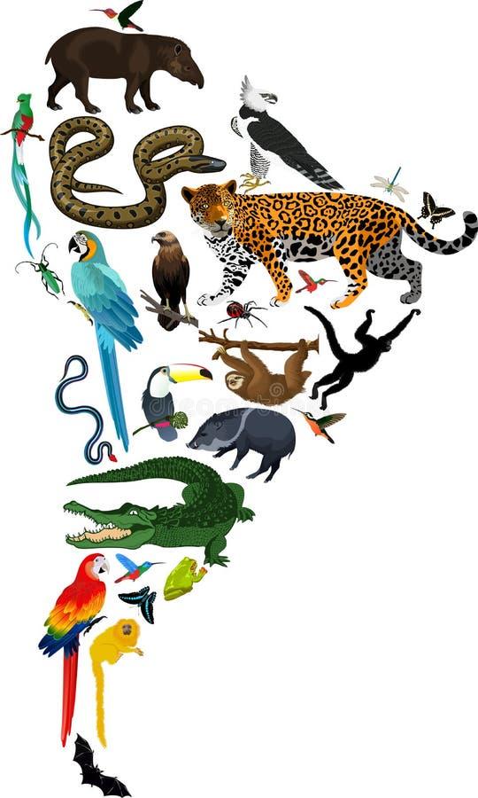 Animales Suramérica - ejemplo del vector ilustración del vector