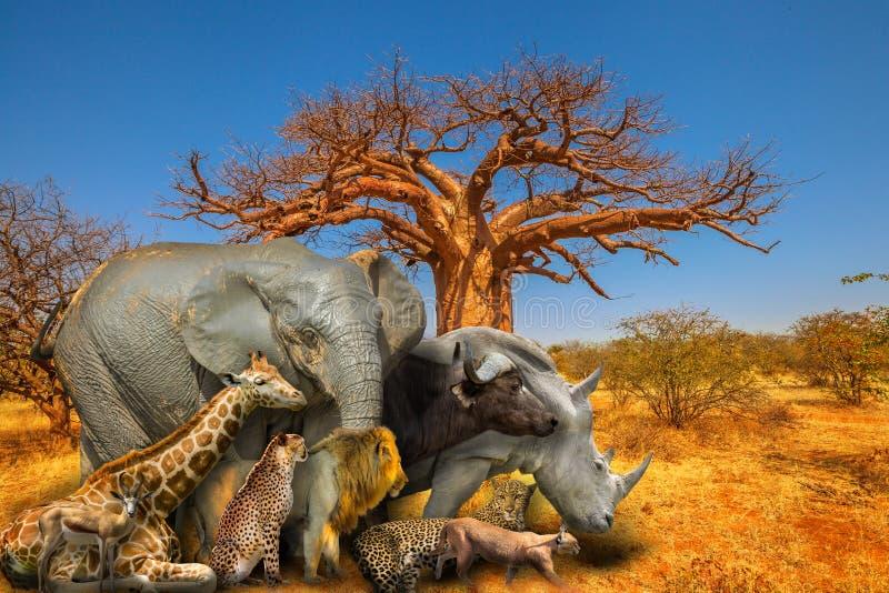 Animales y fondo africanos del baobab foto de archivo libre de regalías