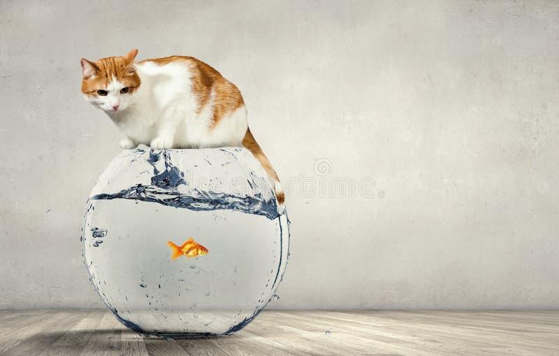 Animali adorabili divertenti Media misti fotografie stock libere da diritti