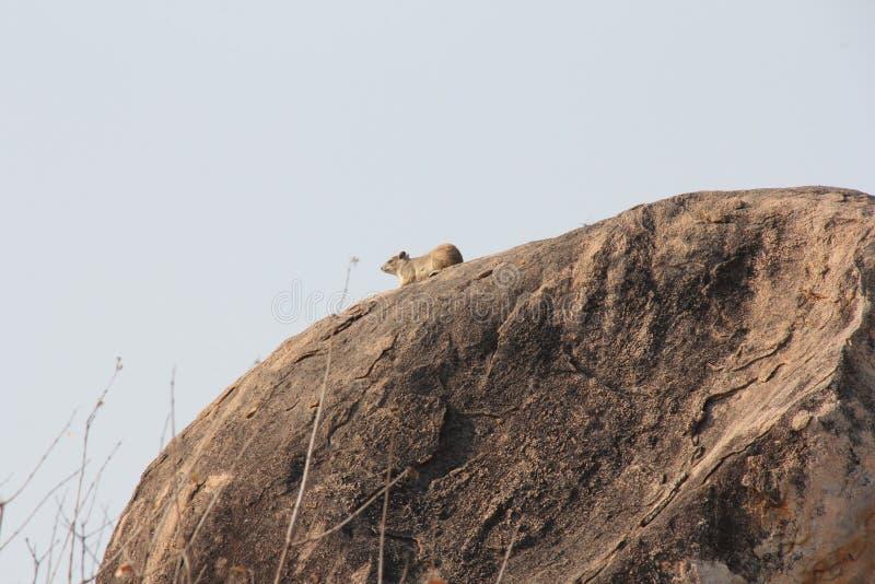 Animali al parco nazionale di ruaha immagini stock libere da diritti