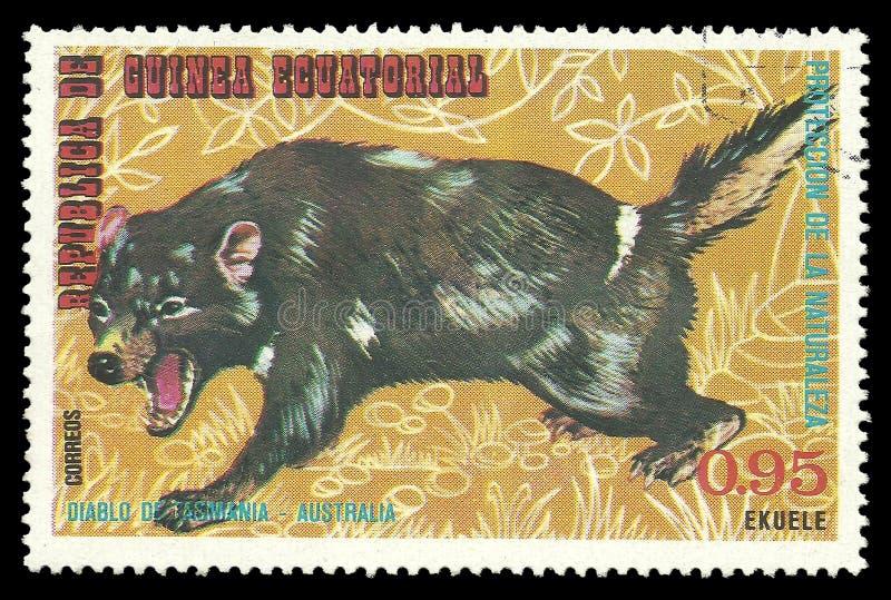 Animali australiani, diavolo tasmaniano fotografie stock libere da diritti