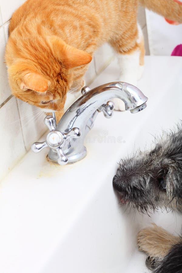 Animali a casa cane e gatto che giocano insieme nel bagno for Casa progetta il trotto del cane