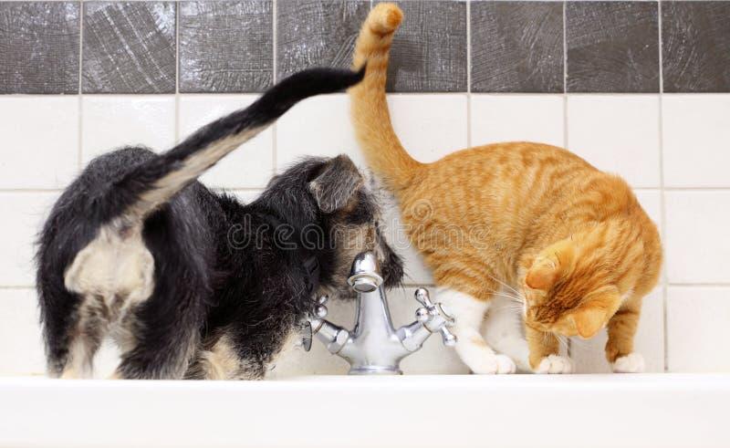 Animali a casa cane e gatto che giocano insieme nel bagno fotografia stock