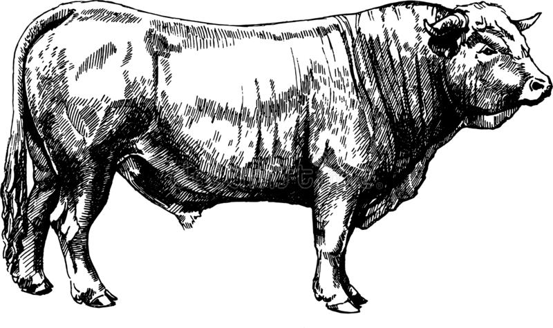 Animali da allevamento per illustrazioni grafiche vettoriali Obrak Bull maker royalty illustrazione gratis