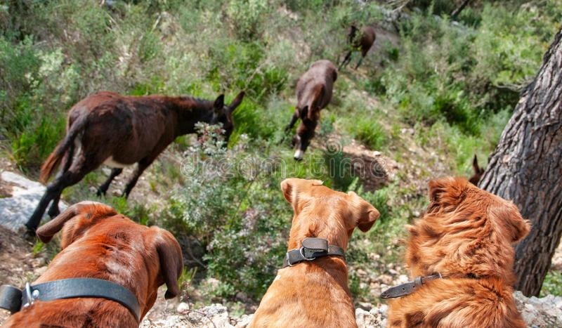 animali da compagnia, cani fotografie stock