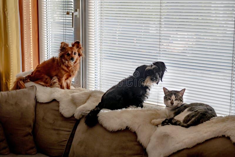 Animali da compagnia nella finestra fotografia stock
