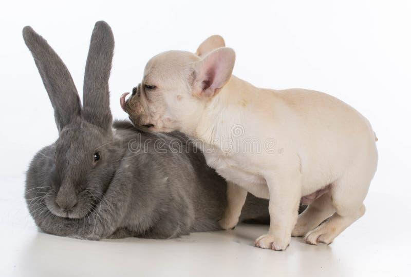 Animali del bambino fotografie stock libere da diritti