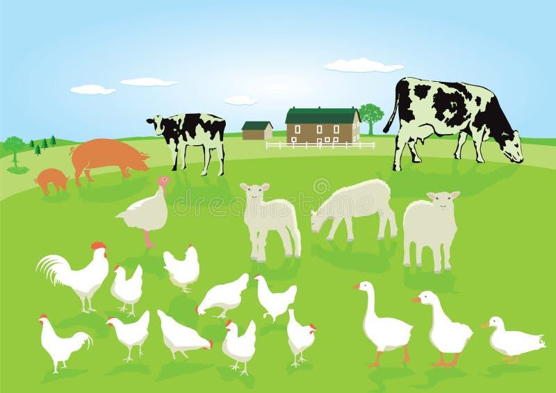 Animali del cortile in un campo royalty illustrazione gratis