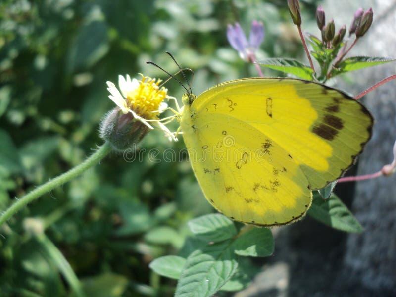 Animali della farfalla con i bei colori fotografia stock