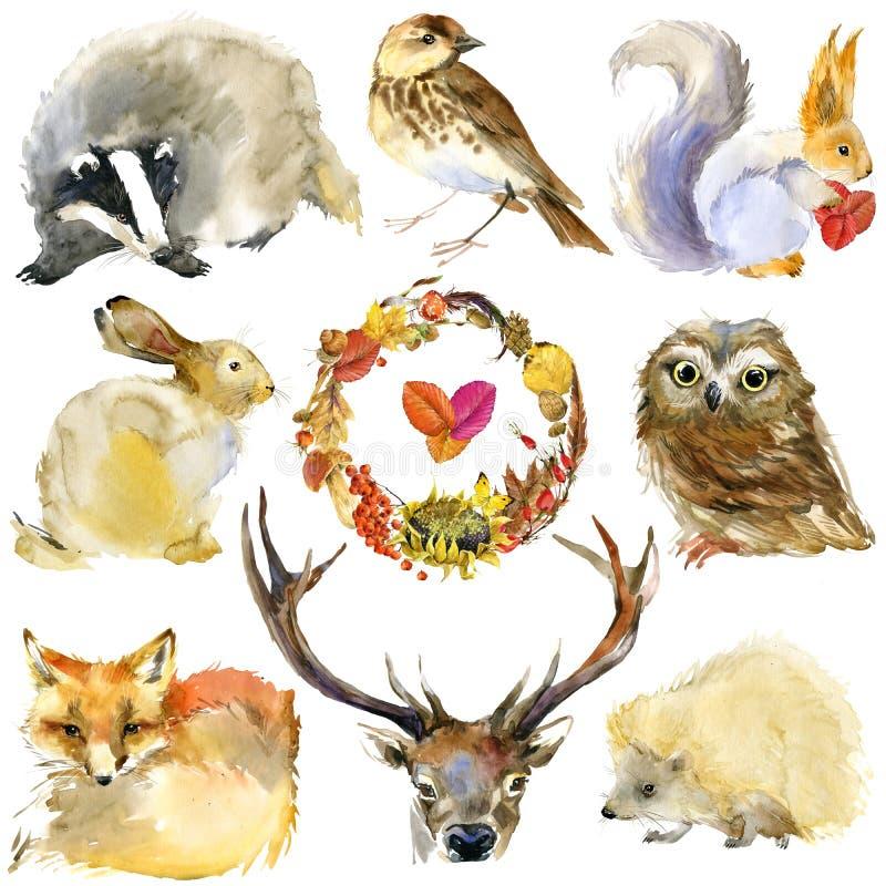 Animali della foresta dell'acquerello messi illustrazione vettoriale