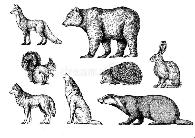 Animali della foresta Fox, orso, scoiattolo, lupo, tasso, istrice, lepre, coniglio, coniglietto royalty illustrazione gratis