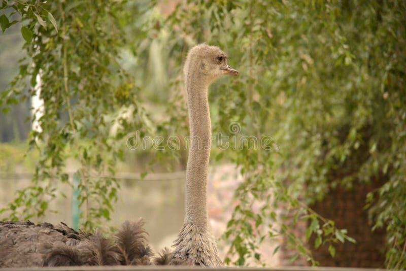 Animali dello zoo fotografia stock libera da diritti
