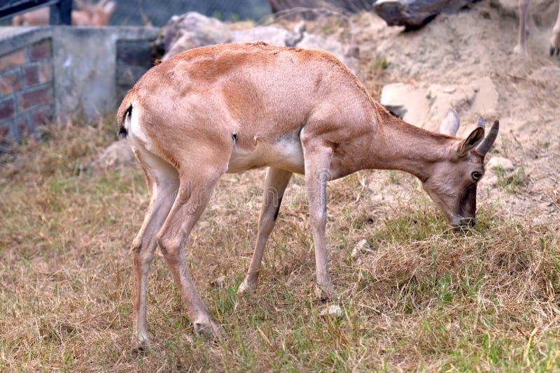 Animali dello zoo fotografia stock