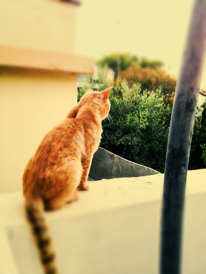 Animali di wiskas dell'animale domestico del gatto soleggiati fotografie stock