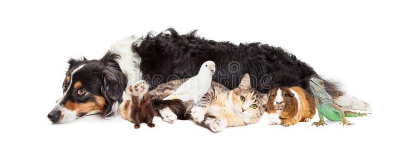 Animali domestici insieme sull'insegna bianca fotografia stock libera da diritti