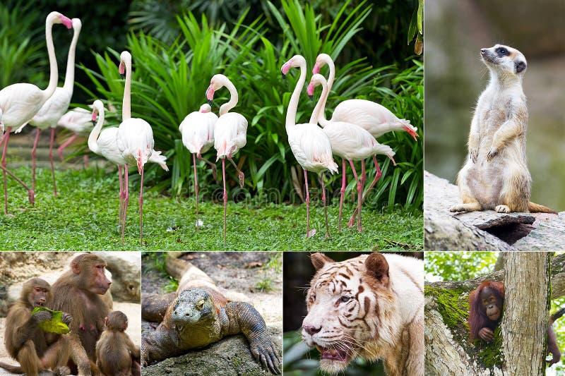 Animali nello zoo fotografia stock libera da diritti