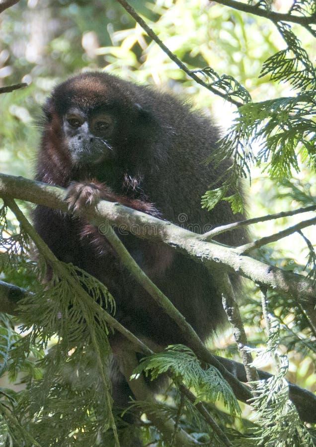 Animali, piante, uccelli ed insetti fotografie stock libere da diritti