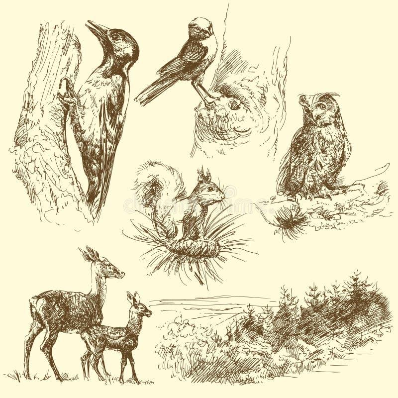 Animali selvatici illustrazione di stock