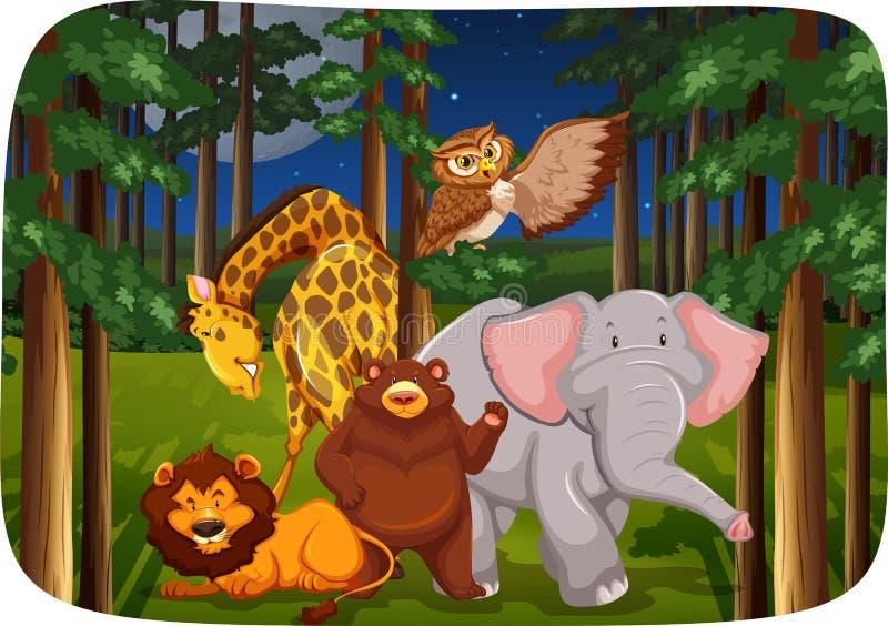 Download Animali selvatici illustrazione vettoriale. Illustrazione di aperto - 55365375