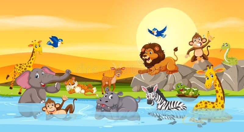 Animali selvatici al tramonto del fiume royalty illustrazione gratis
