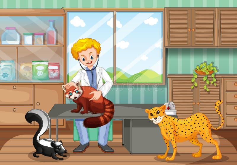 Animali selvatici curativi del veterinario nella clinica illustrazione vettoriale