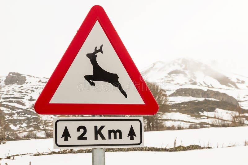Animali selvatici del pericolo del segnale stradale - immagini stock libere da diritti