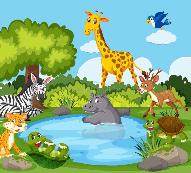 Animali selvatici intorno ad uno stagno illustrazione vettoriale