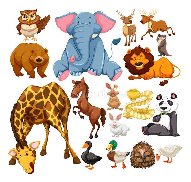 Animali selvatici su bianco illustrazione di stock