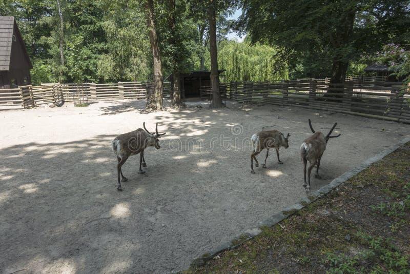 Animali selvatici in zoo fotografie stock libere da diritti