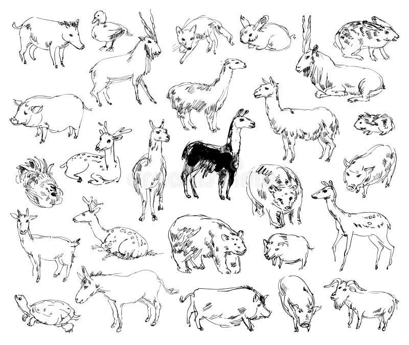 Animali selvatici zoo insieme Disegnato a mano illustrazione vettoriale