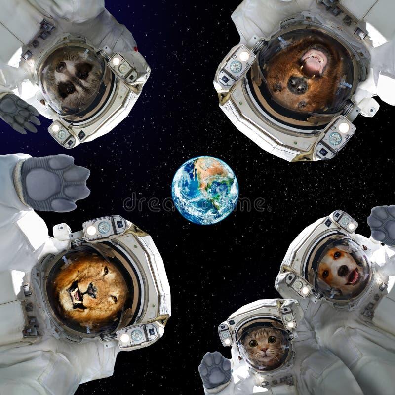 Animali in tute spaziali nello spazio sui precedenti del pianeta Terra illustrazione di stock