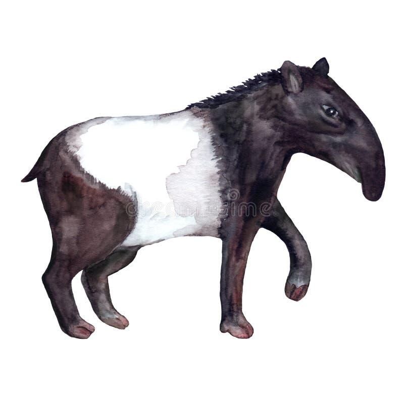 Animali vivi selvaggi iper-realistici dell'acquerello dell'Asia - tapiro in bianco e nero illustrazione di stock