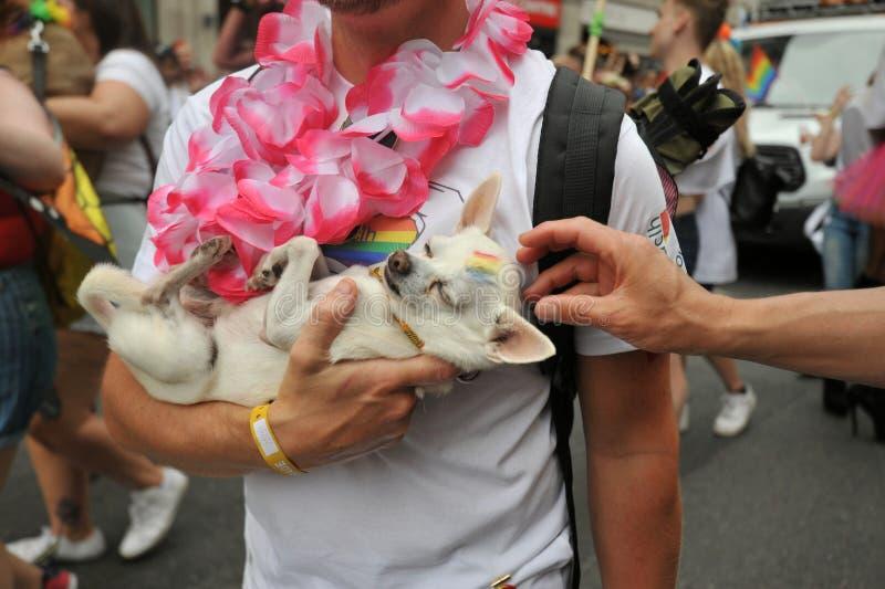 Animalisti al gay pride a Londra, Inghilterra 2019 immagini stock libere da diritti