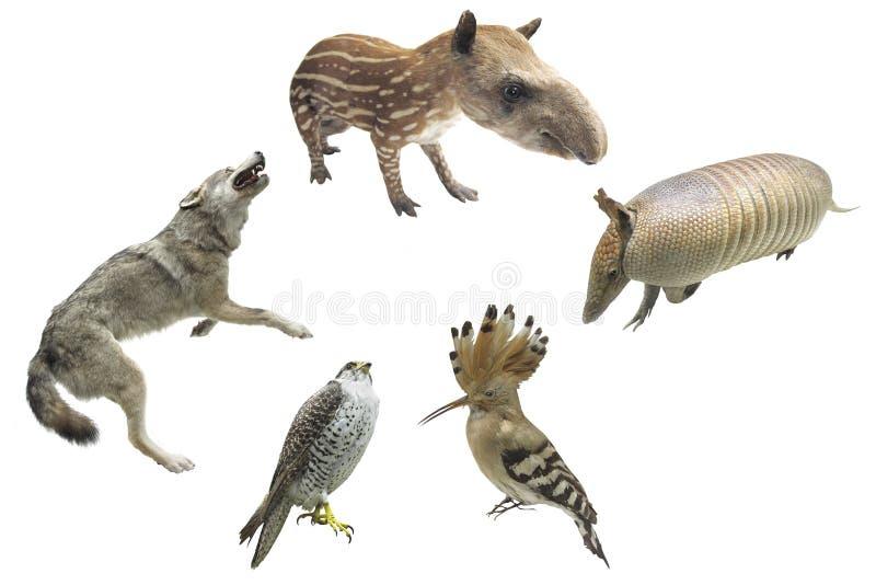 Animals Royalty Free Stock Photography