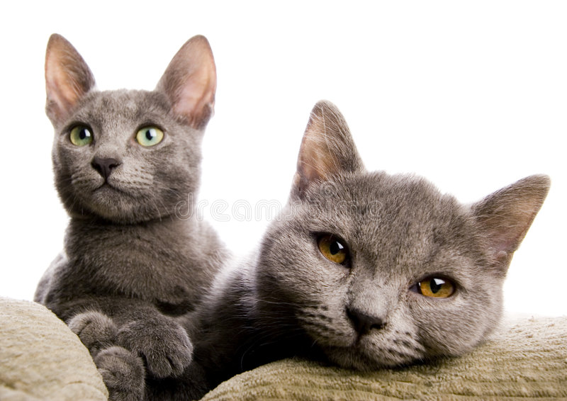 Animals. Cat - the small furry animal with four legs and a tail; people often keep cats as pets stock photography