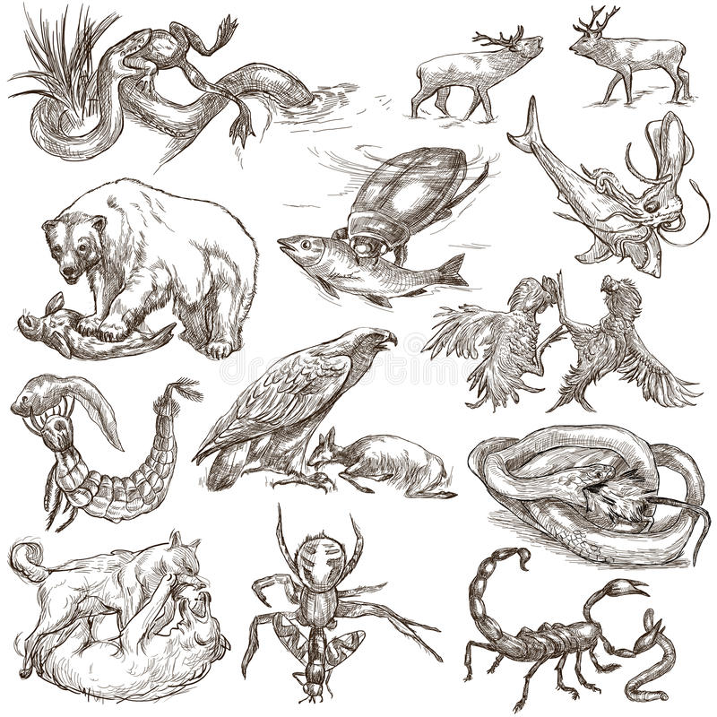 Animals in action, Predators - An hand drawn full sized illustrations. Collection on white. Animals in action around the World - Predators. An hand drawn full royalty free illustration