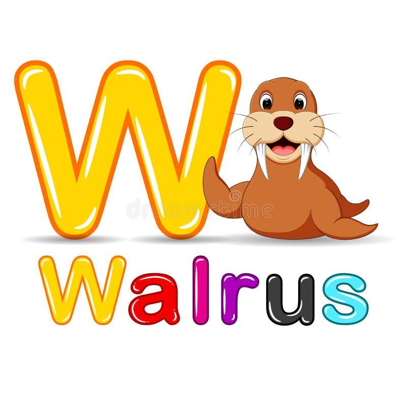 Animals alphabet: W is for Walrus royalty free illustration
