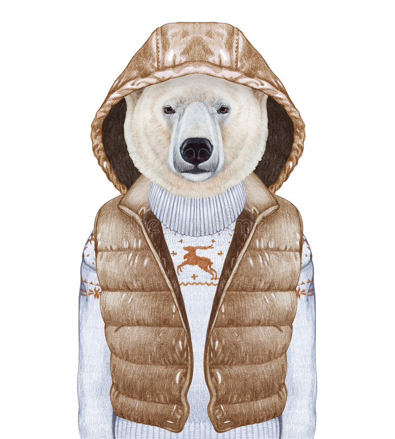 Free Animals As A Human. Polar Bear In Down Vest And Sweater. Stock Image - 85958741