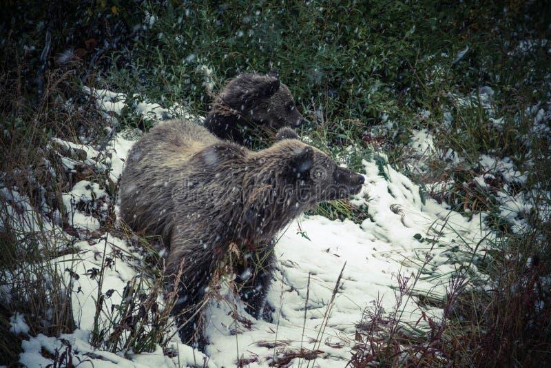 Animals, Bears, Cold stock image