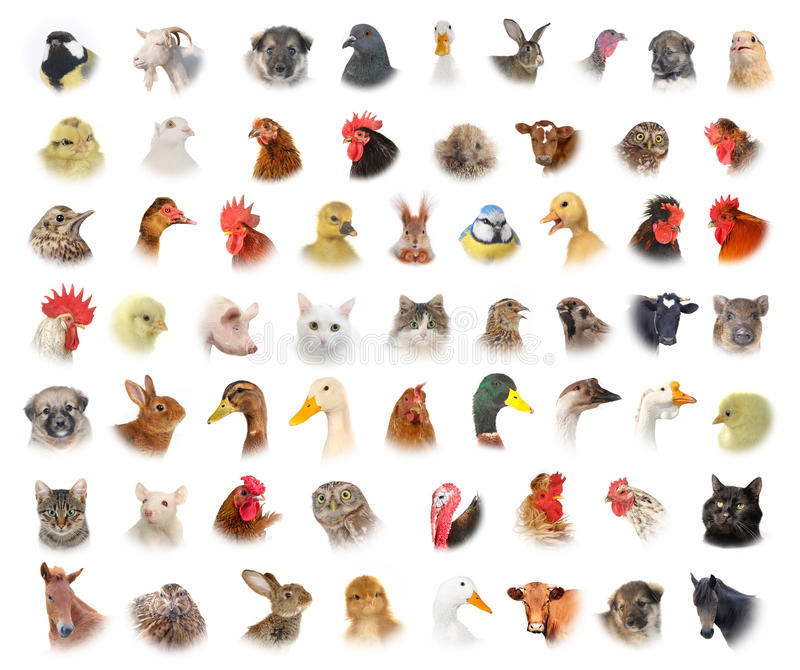 Animals and birds. Isolated portraits of animals and birds stock photo
