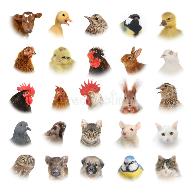 Animals and birds. Isolated portraits of animals and birds stock photography