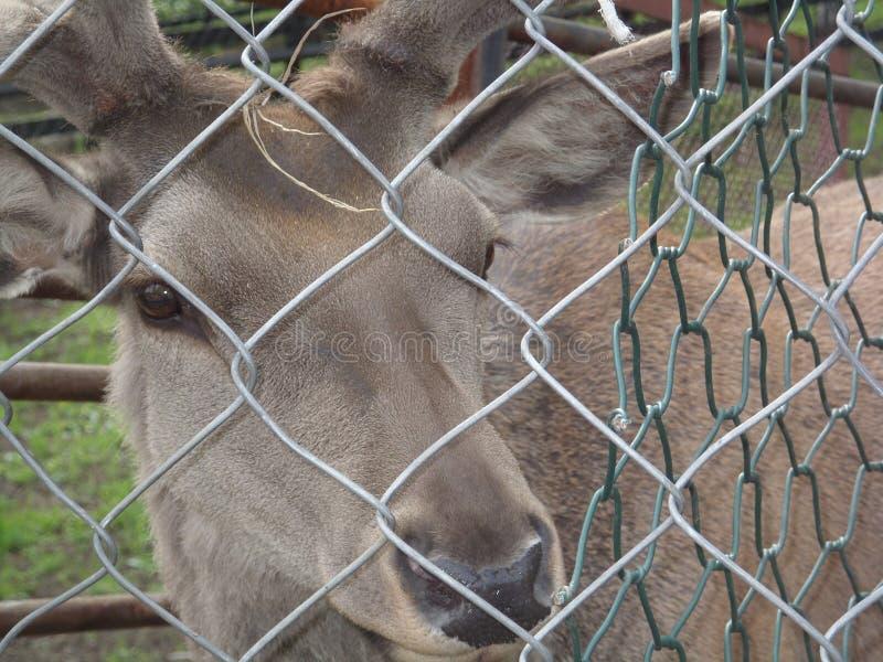 Animals in captivity royalty free stock photo