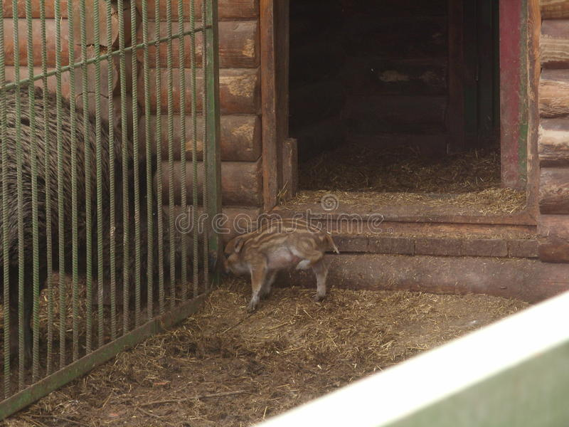 Animals in captivity stock image