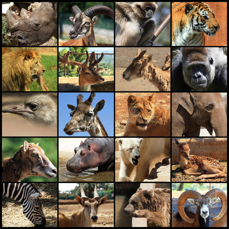 Free Animals Collage Royalty Free Stock Photos - 14477218