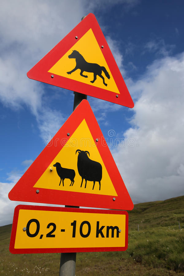 Download Animals Crossing stock image. Image of iceland, caution - 83720905
