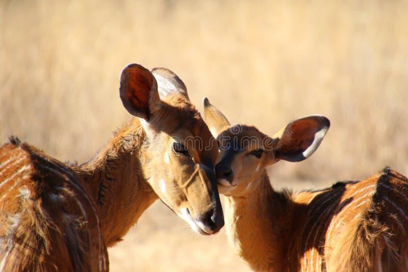 Animals, Cute, Daylight royalty free stock photos